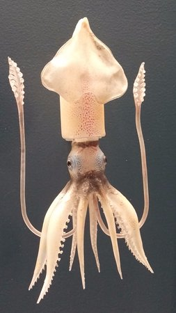 Corning, NY: Tiny glass squid - amazingly detailed and delicate