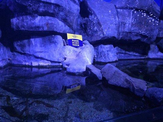 North Queensferry, UK: Rock pool enclosure