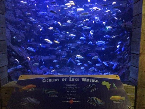 North Queensferry, UK: Malawi enclosure