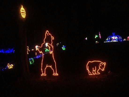 Vienna, VA: Bears!
