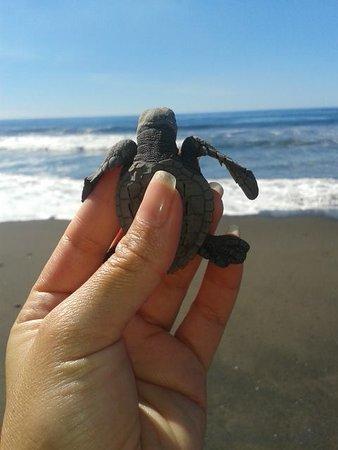 Hawái, Guatemala: Playa Plana cuenta con tortugario propio y se puede disfrutar esta atracción sin costo adicional
