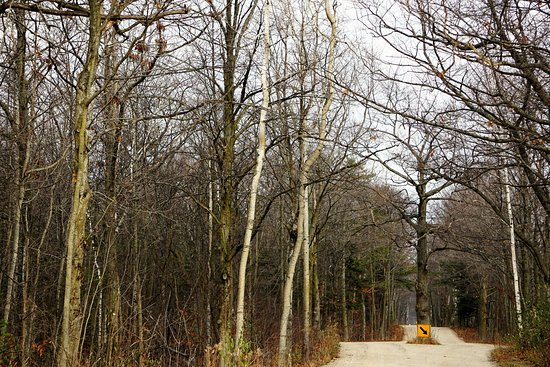 Ellison Bay, WI: Narrow road to the Bluff with Cherry Orchards on your right.
