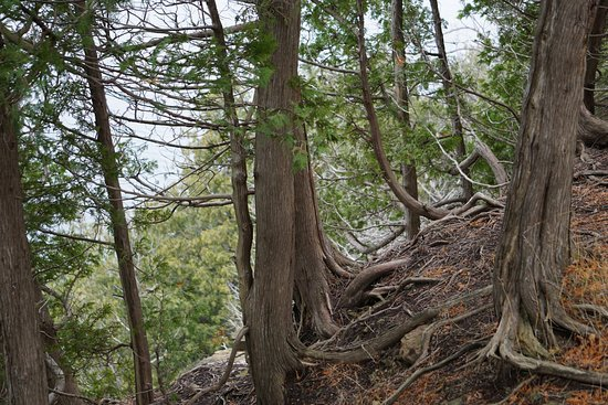 Ellison Bay, WI: Note the erosion of soil and exposure of the roots of trees. Be careful not to walk at the edge.