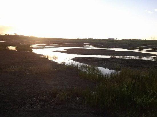 La Brea Pitch Lake: Pitch Lake