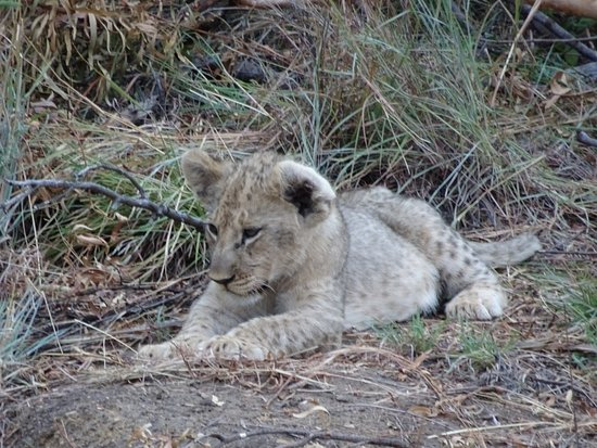 Madikwe Game Reserve afbeelding