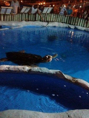 Aracaju Aquarium - Tamar: Tanque das tartarugas