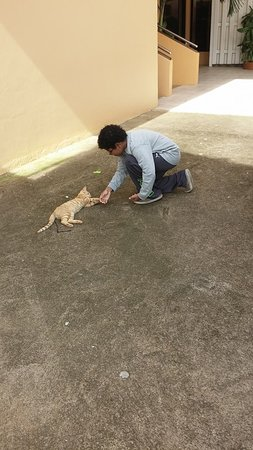 Hotel Partenon Beach La Ceiba : My son with Gringo the hotel cat