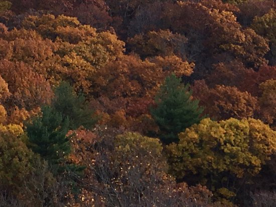 Hamden, CT: a close-up of fall color from the Tower at top of trail