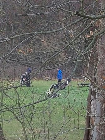 Bearsted, UK: Watching a fox watching the golfers from the room.