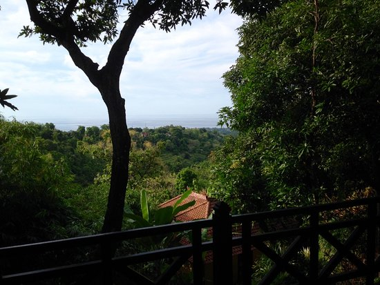 Puri Mangga Sea View Resort & Spa: View from the Palm house