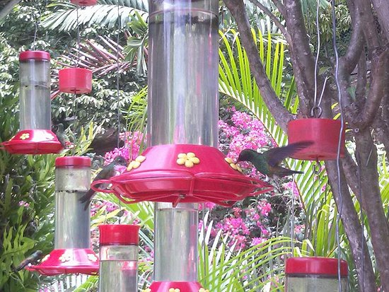 Maracas Bay, Trinidad: Hummingbirds