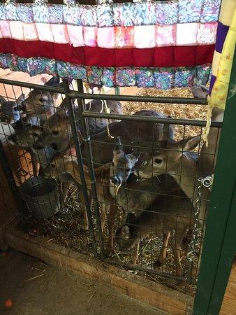Ellijay, GA: Build an Ark Animal Rescue