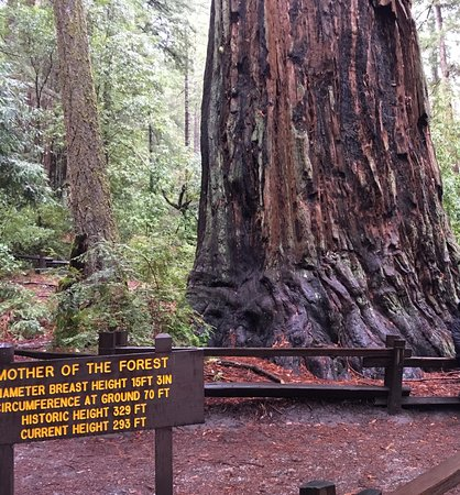 Boulder Creek, CA: Mother of The Forest