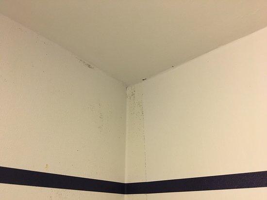 Hotel Zephyr: DIRTY   Mold On Bathroom Walls, Toothpaste Splatter On Bathroom  Wall,
