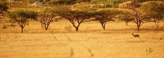 Landscape - Picture of Kwetu Guest Farm, Swellendam - Tripadvisor