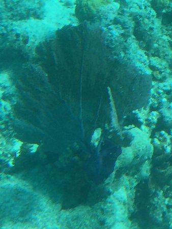 Undersea Explorer : Colourful reef