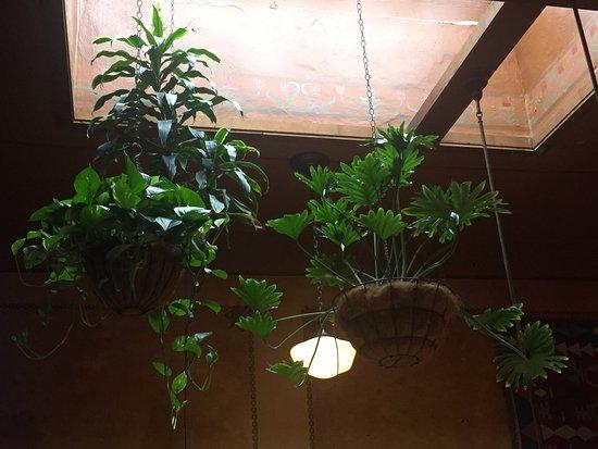 Centralia, WA: Beautiful skylight gardens