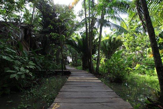 Orinoco Delta Photo