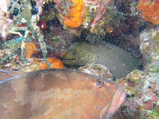 Cayman Brac: Photo Bombed by Grouper