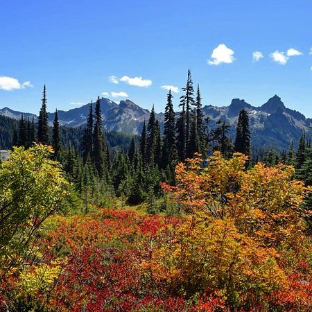 Mount Rainier: The fall colors were spectacular.