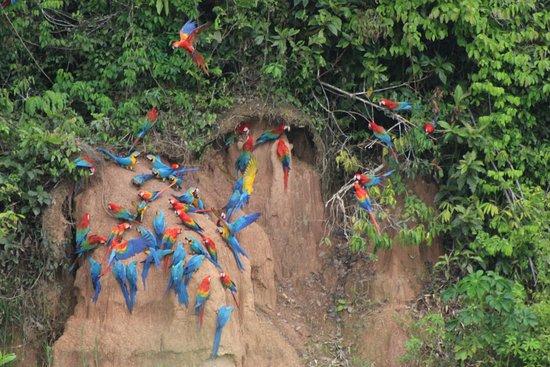 Refugio Amazonas: What can be seen