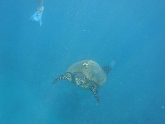 Wailuku, Hawái: Turtle Town