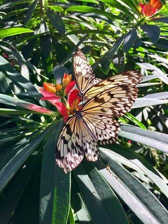 Butterfly Rainforest Foto