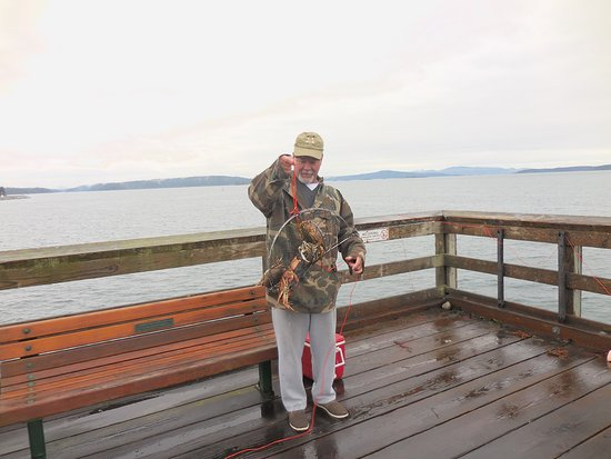 Sidney Pier resident crabbing