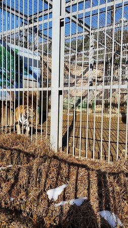Daejeon, South Korea: 호랑이...