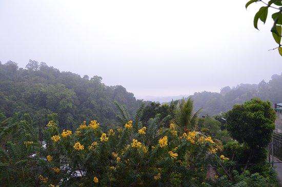 Nature Walk Resort-bild