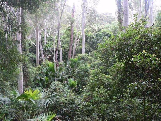 Durras North, Австралия: rain forest walk
