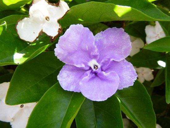 Kershaw Gardens: Floral bloom