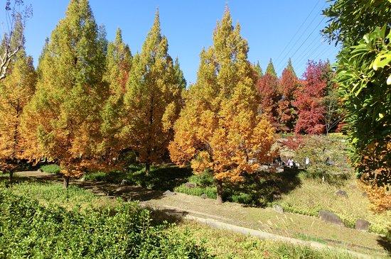 Komaki, Japón: 秋の季節も素敵です