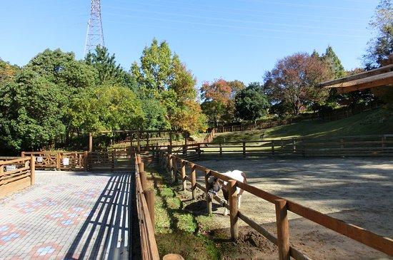 Komaki, Japón: ちびっこ動物村