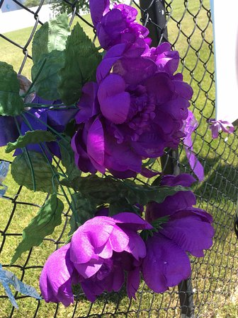 Chanhassen, MN: Flowers for Prince; tons of tributes & pictures taken on his Fence!