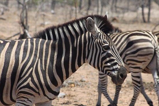 Nationaal Park Kruger Foto