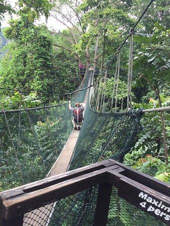 Frim Canopy Walk Kuala Lumpur 2019 Ce Qu Il Faut Savoir Pour