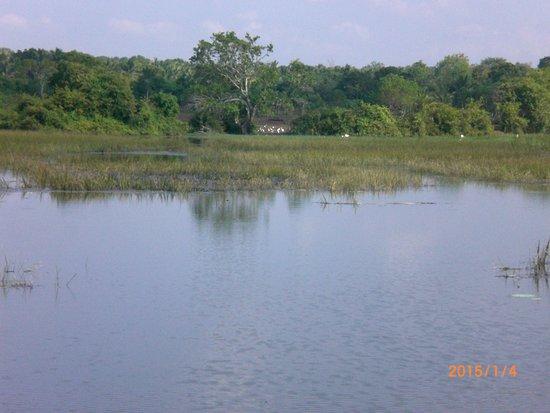 Rekawa, Σρι Λάνκα: lagoon
