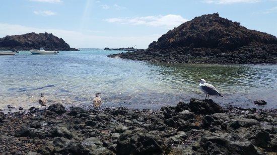 isla de lobos - Picture of Isla de Lobos, La Oliva - TripAdvisor