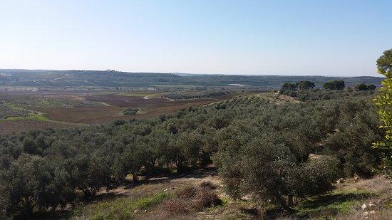 Beit Shemesh, Israel: Mony Winery