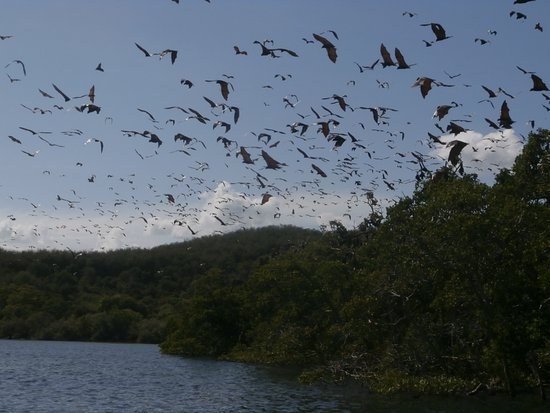 Cibal, Indonésie : Amazing Bat