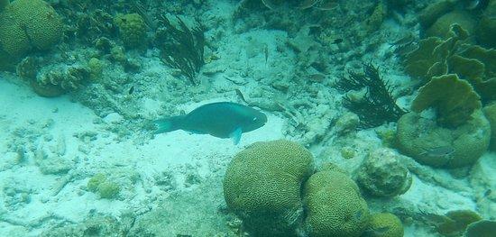 Kralendijk, Bonaire: Selbst mit einer wasserdichten kleinen Kamera kann man auf Fischsafari gehen