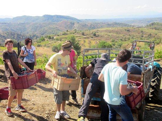 Gratallops, Spain: Vendanges