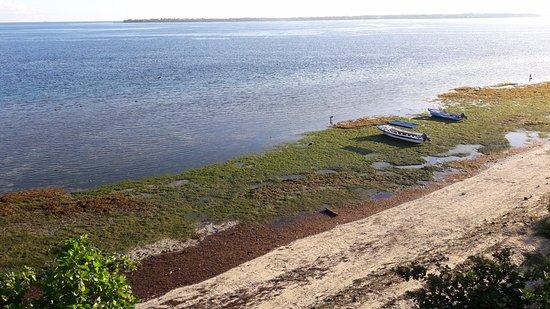Cabilao Island, Filipinas: Strand vom Zimmer aus bei Ebbe