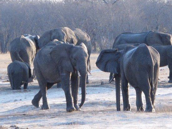 Bomani Tented Lodge: elefanti che giocano
