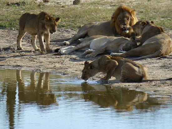 Ganda Lodge Hwange National Park Zimbabwe Reviews