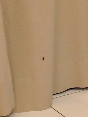 Seri Bukit Ceylon Residences: Cockroaches on the curtains in the living area.