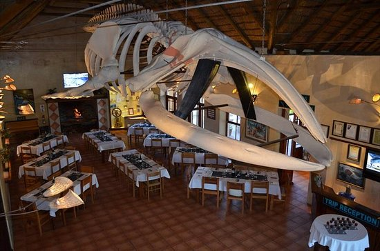 Kleinbaai, África do Sul: Suzi, the whale. Largest skeleton in a private collection.