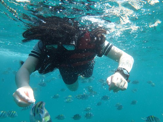 Phu NaNa Boutique Hotel: Feeding Fish at Coral Island