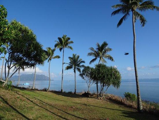 Kaneohe, HI: palm trees